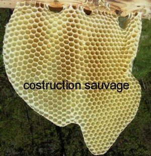 construction_sauvage.jpg
